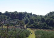 olives-vineyards-vis